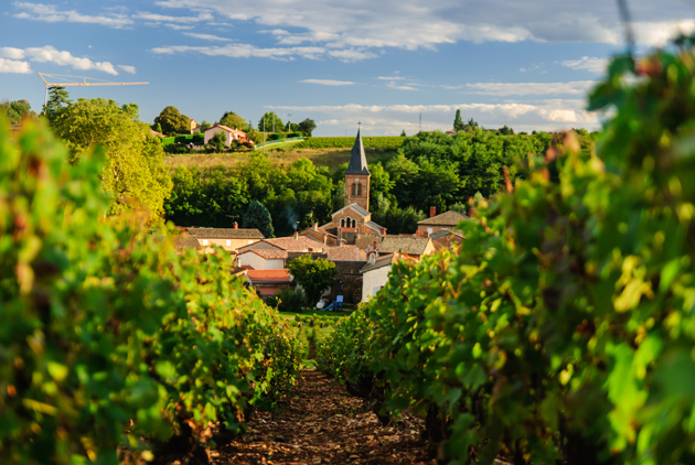 Walk through the legendary vineyards