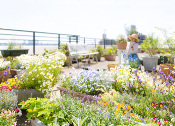 What You Need To Know Before Building A Rooftop Garden