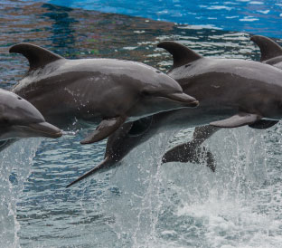 Dolphins Wave-SouthAfrica